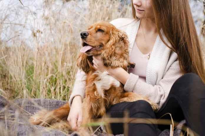 Cachorro Cocker Spaniel Inglês abraçado