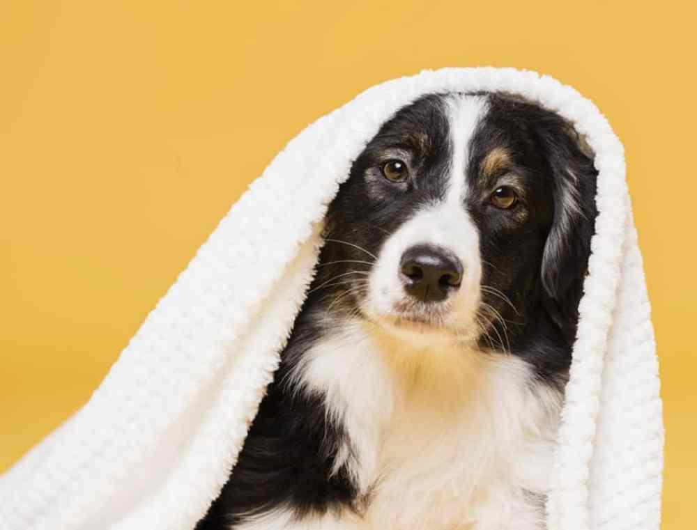 Cachorro enrolado em toalha
