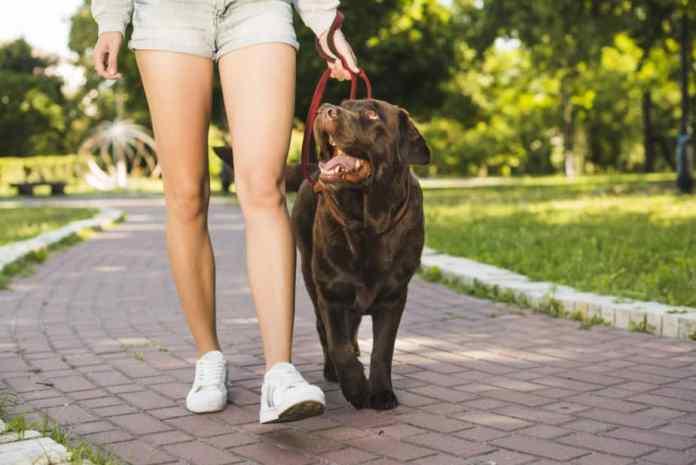 Mulher em passeio com cachorro