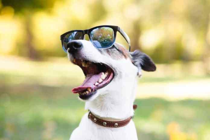 Cachorro do Máskara com óculos sorrindo - Créditos da imagem: Freepik