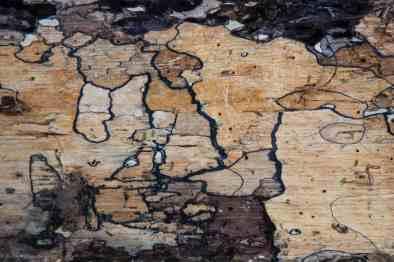 Krieg der Pilze... jede dunkle Linie ist ein Schlachtfeld