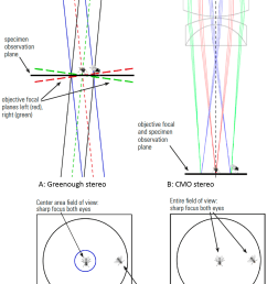 fig 6 two flies observed by a stereo microscope a and c greenough optics where specimens in the center at the point of convergence of the two objective  [ 1248 x 1914 Pixel ]
