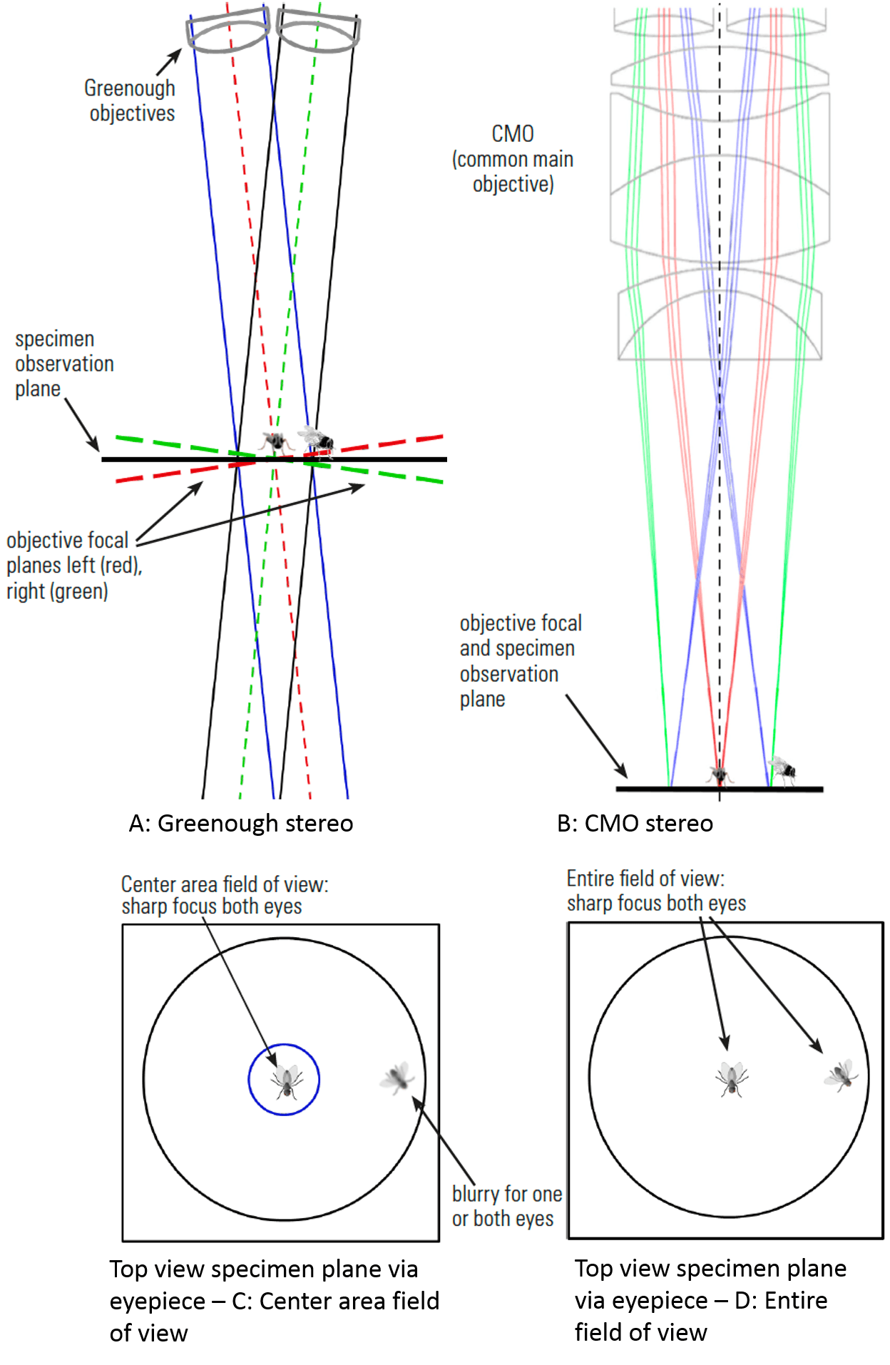 hight resolution of fig 6 two flies observed by a stereo microscope a and c greenough optics where specimens in the center at the point of convergence of the two objective