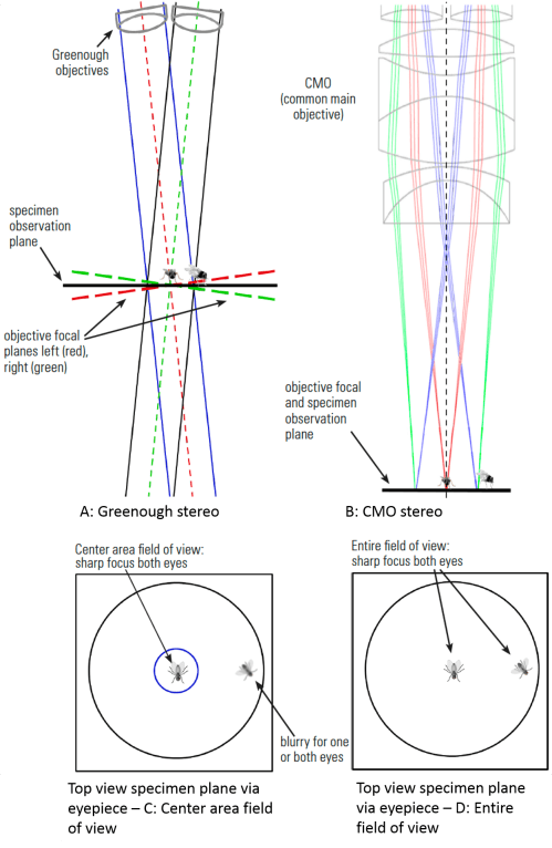 small resolution of fig 6 two flies observed by a stereo microscope a and c greenough optics where specimens in the center at the point of convergence of the two objective