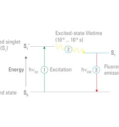 figure 3 fluorescence jablonski diagram fluorophores can absorb photons the energy of the photon raises the electrons of the fluorophore to a higher  [ 1500 x 1060 Pixel ]