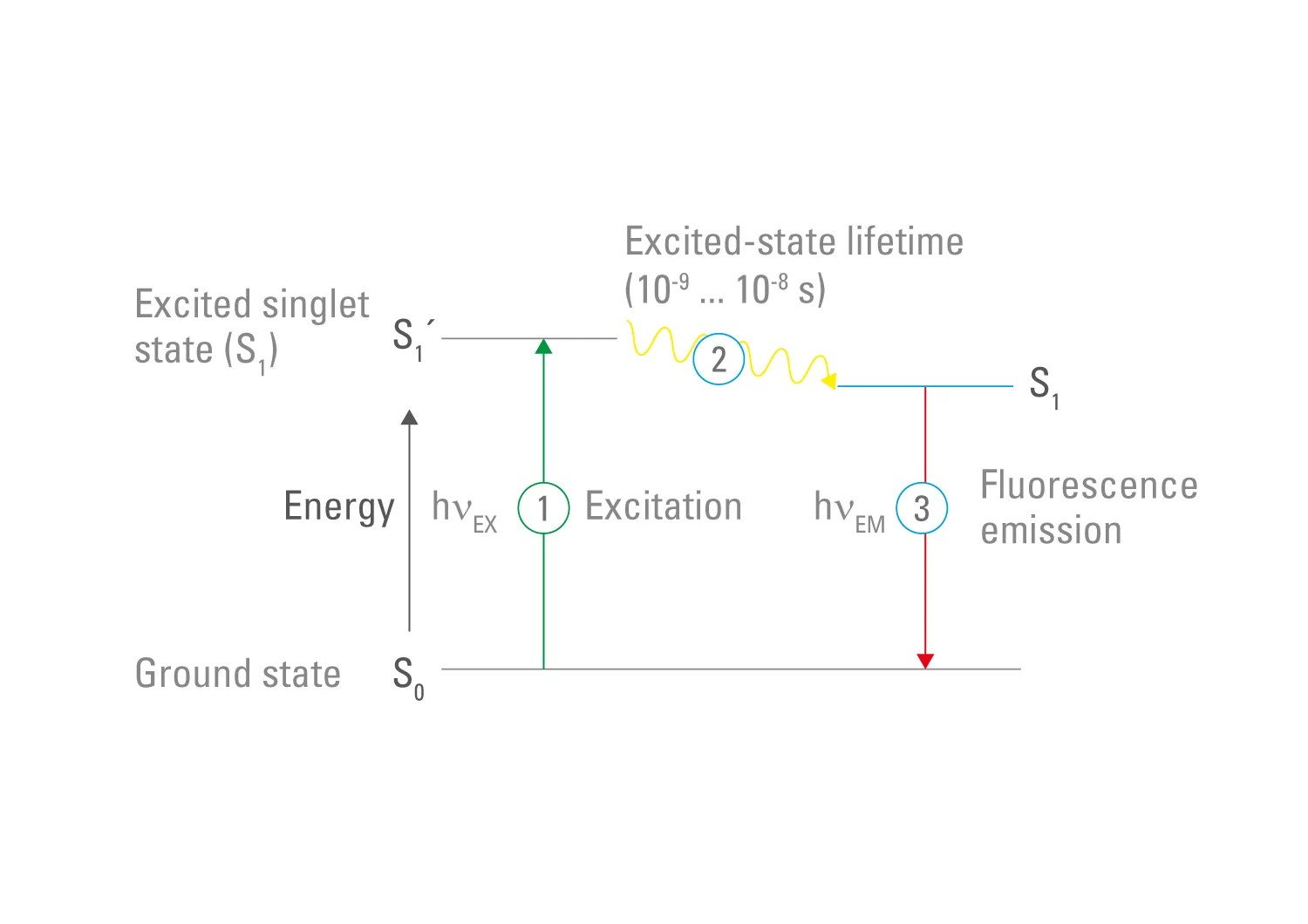 hight resolution of figure 3 fluorescence jablonski diagram fluorophores can absorb photons the energy of the photon raises the electrons of the fluorophore to a higher