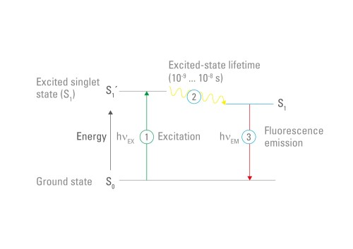 small resolution of figure 3 fluorescence jablonski diagram fluorophores can absorb photons the energy of the photon raises the electrons of the fluorophore to a higher