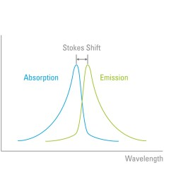 figure 4 stokes shift the wavelength of the emission light is always longer than that which was used to excite the fluorophore  [ 1500 x 1060 Pixel ]