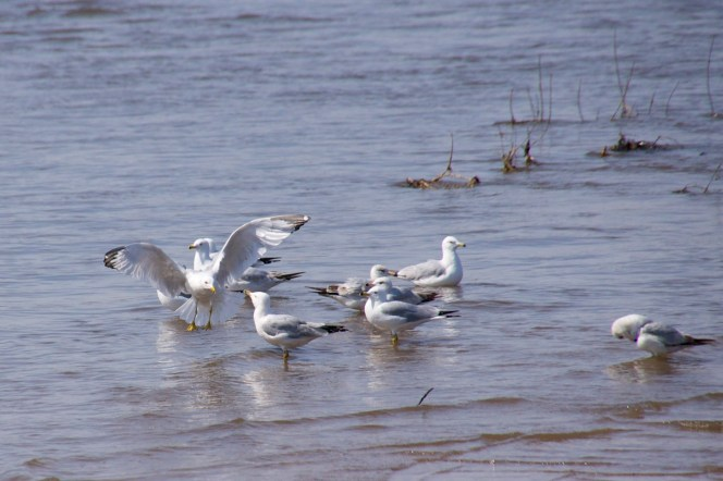 Here is the popular 80's band - A Flock of Sea Gulls