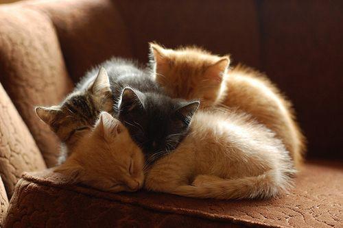 *cat* *cat* *cat* *cat*