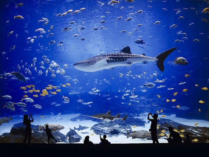 The Georgia Aquarium, located in Atlanta, Georgia, is the world's largest aquarium with more than 8.5 mill
