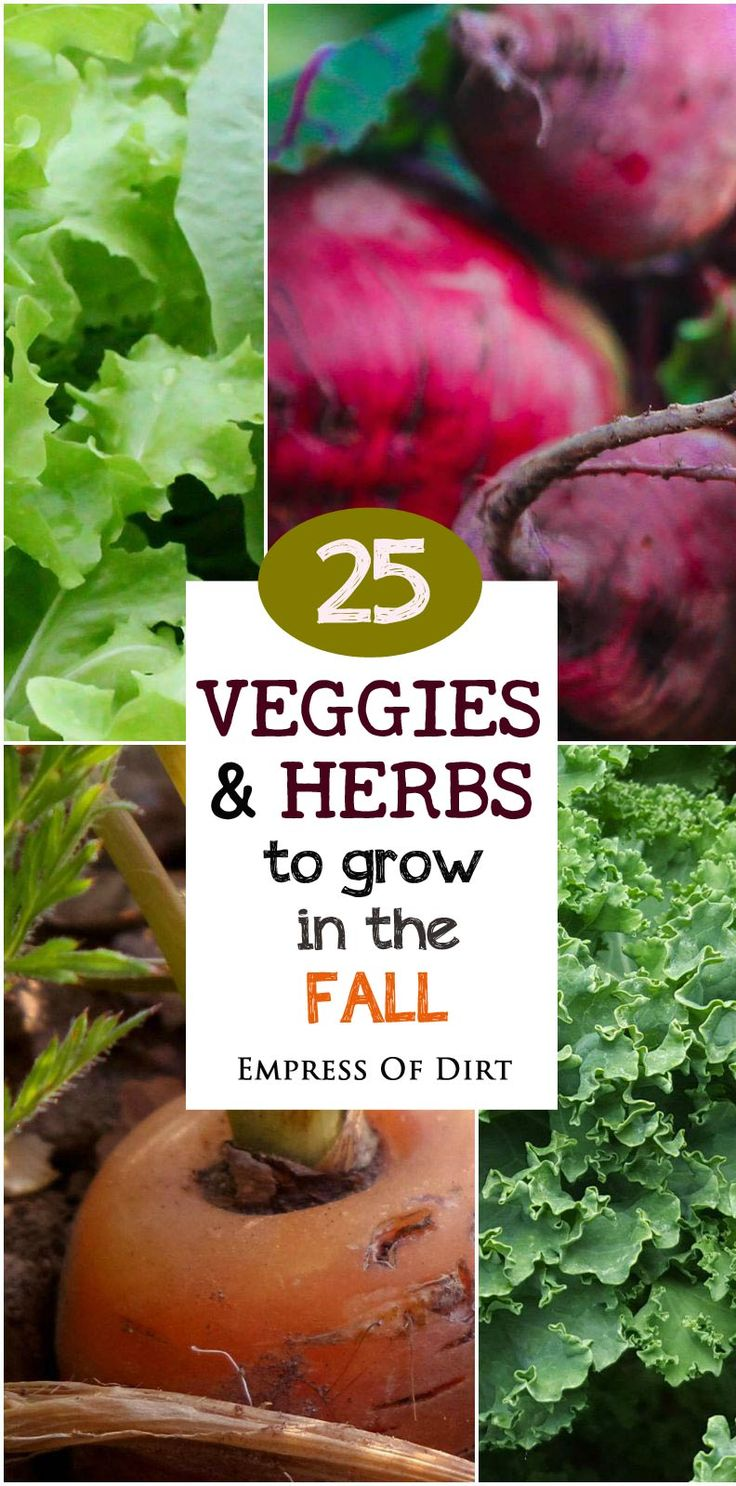 Some of the most delicious vegetables are the cold-loving ones that grow best in spring and fall. Dependin