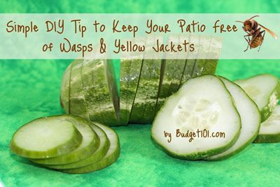 Prevention of wasps and yellow jackets. Slice a fresh cucumber into thin slices and arrange them in a sing