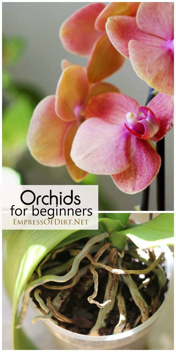 Orchids for beginners: an experienced grower tells how she cares for her orchids and what you need to know