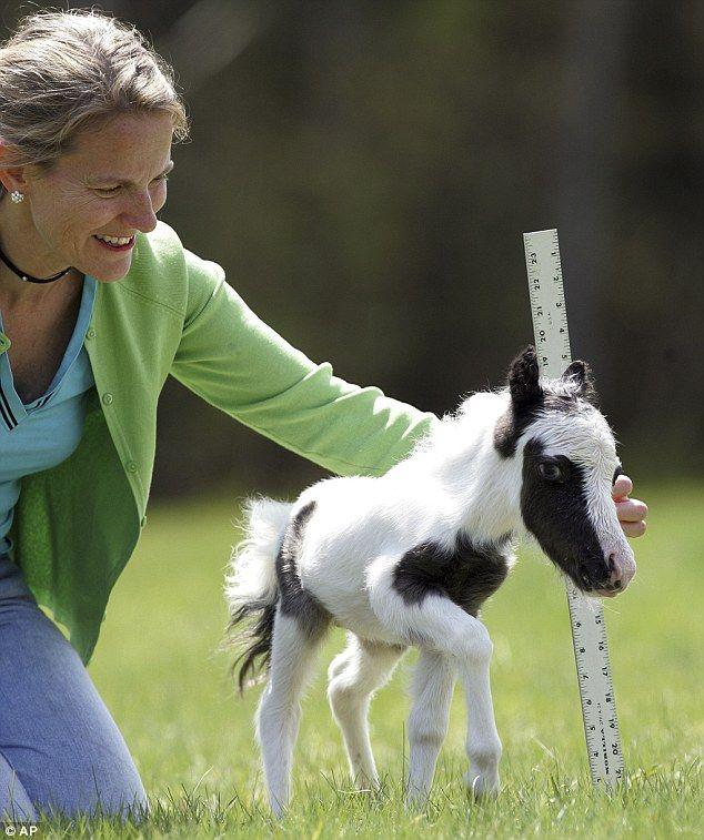 Meet Einstein, the world's smallest horse who weighs less than a newborn baby.  OMG. Oh…..my……goodne