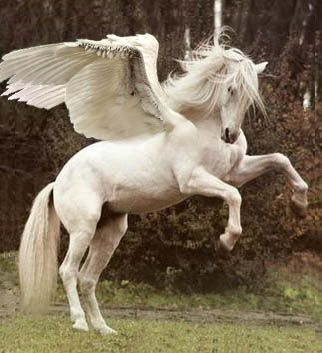 In Greek mythology, Pegasus (Πήγασος, Pégasos) was a winged horse sired by Poseidon, in his ro