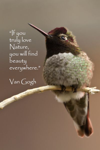 """""""If you truly love Nature, you will find beauty everywhere."""" – Van Gogh – On image of hummingb"""