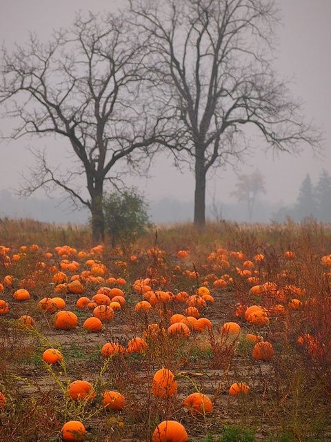 Great shot during perfect pumpkin patch weather. Would be a great design for a custom Fall themed Thro