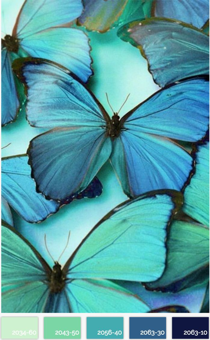 Azure Butterflies – Do you have an eye for color? Share it with us! Submit your ow