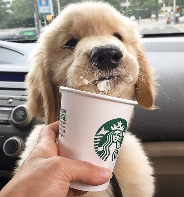 when I get a golden retriever puppy I want to name her Brinkley like on the movie