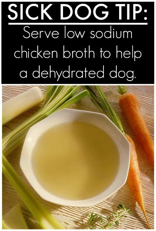 Is your dog sick? Try this Homemade Chicken Broth for Dogs – great for a dog tha