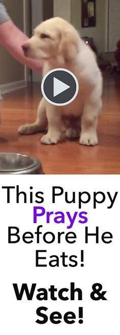 This puppy prays before he eats, and its absolutely adorable! How do I teach