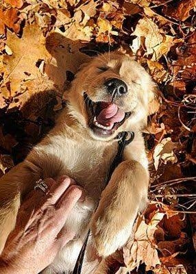 Nothing is better than a happy puppy