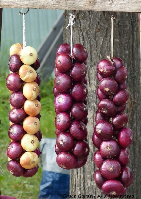 Heres an easy and quick tutorial for learning how to braid onions and store them for a long time. Excellent pictures walk you