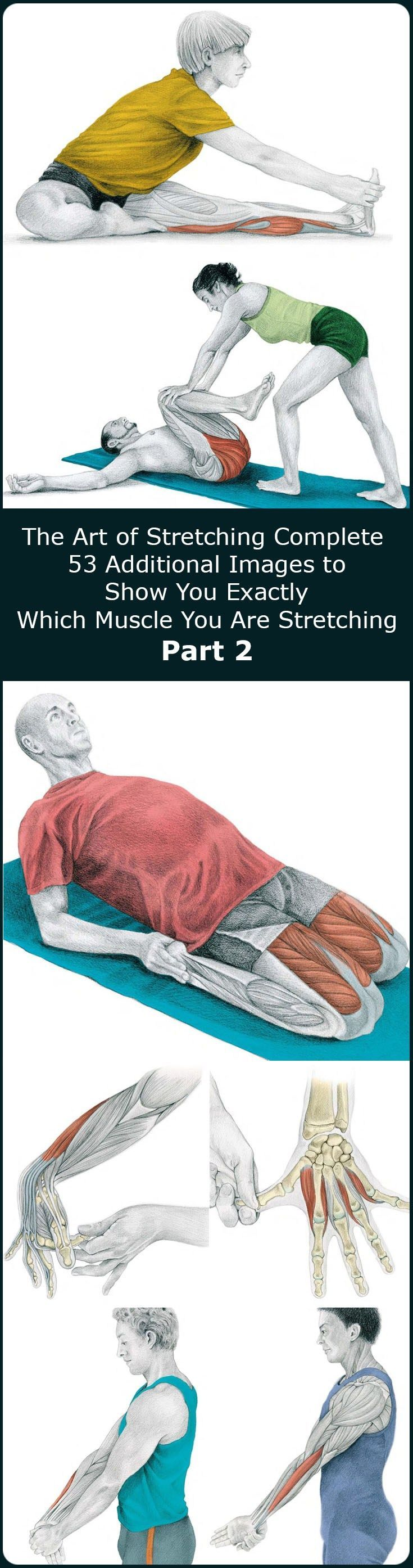 In our previous article The Art of Stretching we presented 36 illustration in color with stretches for specific muscles and
