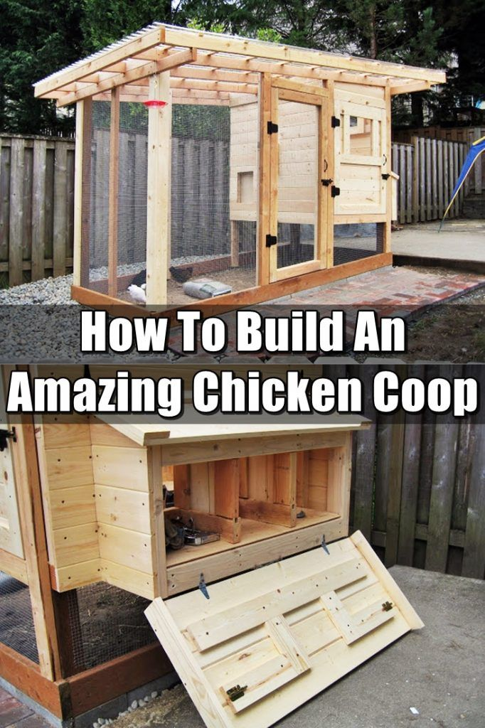 How To Build An Amazing Chicken Coop – Having chickens is rewarding and just pure awesomeness rolled into one. Make sure you have