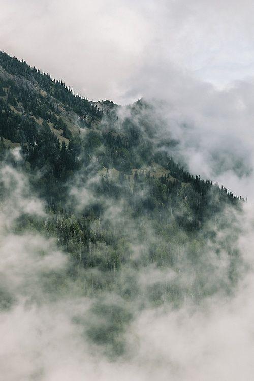 forests & fog