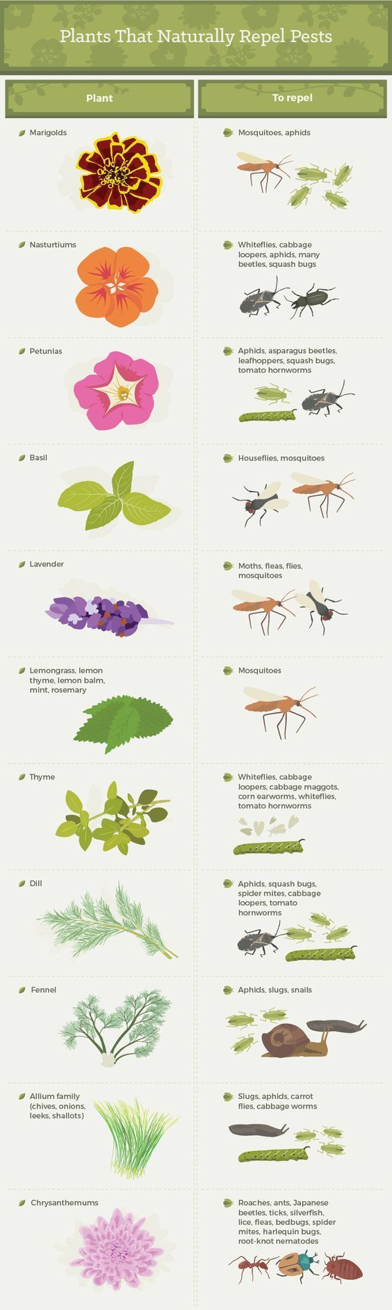 Companion planting for bug control. Found at fix.com awesome article!