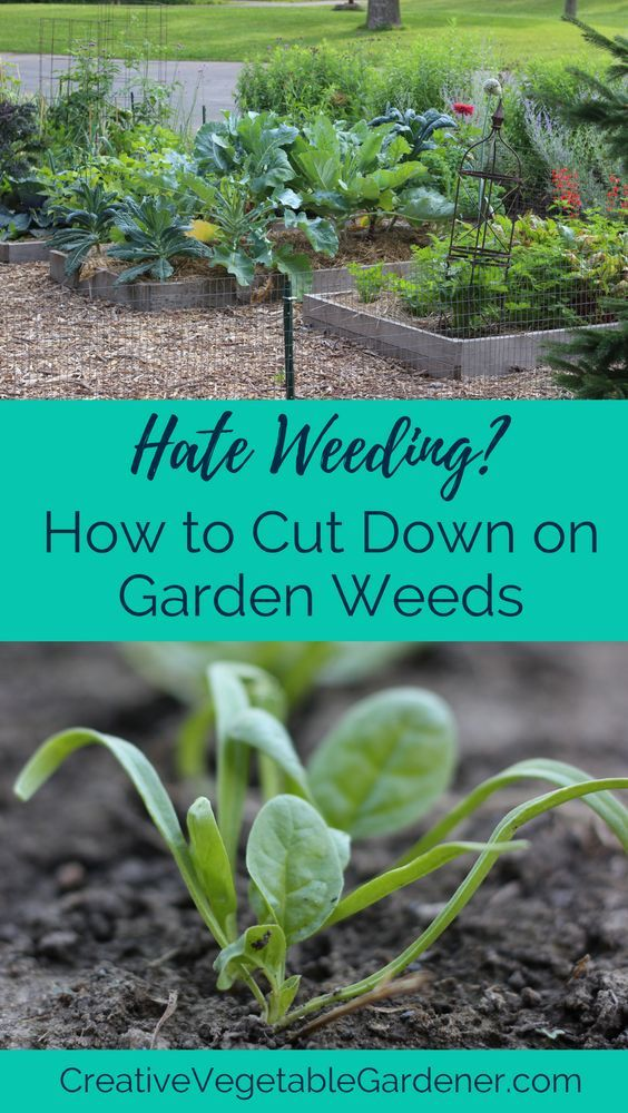 Weeding is a complete waste of time. Heres how to do less of it.