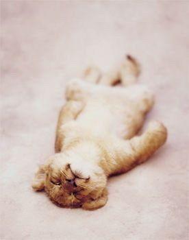 baby lion :)