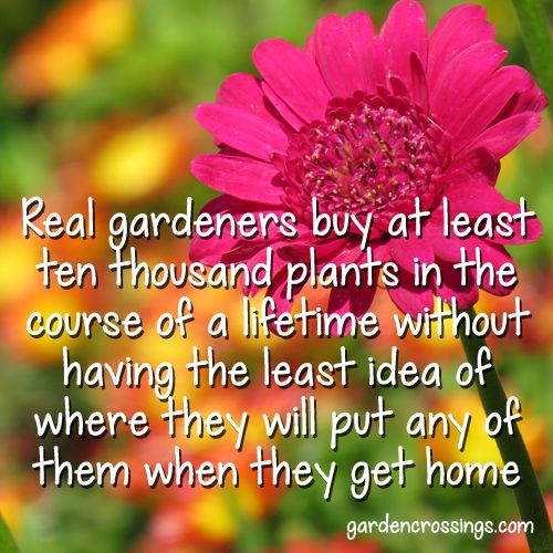 Real Gardeners buy at least tem thousand plants in a course of a lifetime without having the least idea of where they will put any