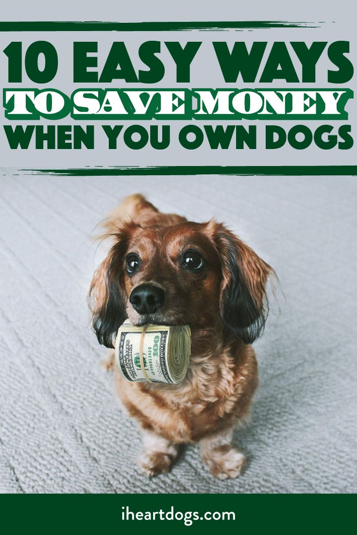 Ways to love your dog and keep your money in your pocket!!