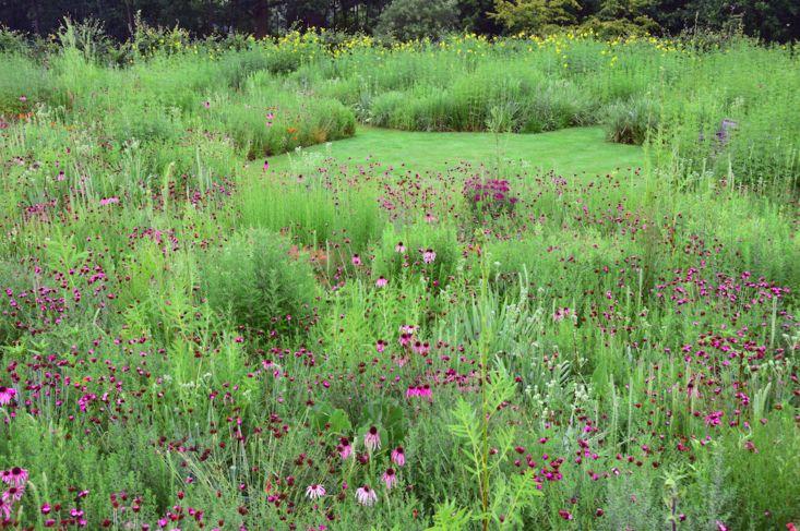 james-hitchmough-tom-stuart-smith-prairie-garden