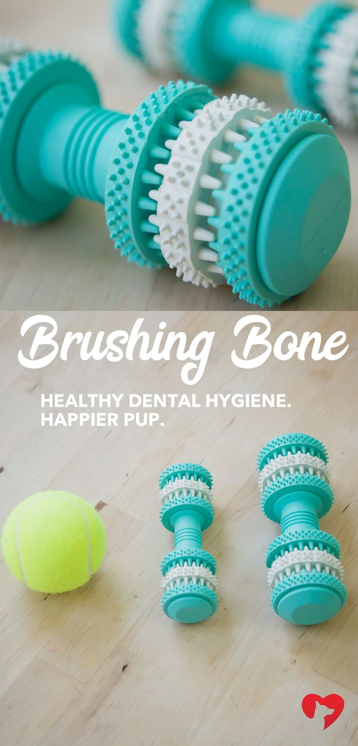 Bad oral hygiene in your pup can lead to dangerous health issues. Take steps to prevent these problems! The Brushing Bone is an