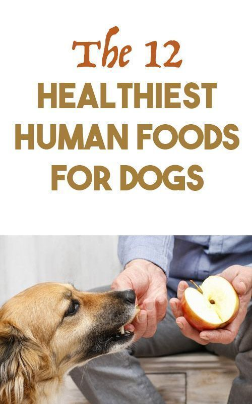 12 Healthiest Human Foods For Dogs