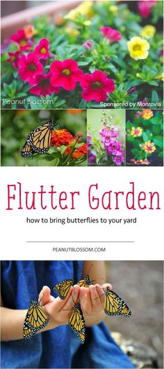 The perfect project to do with your kids this summer — grow a butterfly garden! Love these tips for raising the caterpillars and