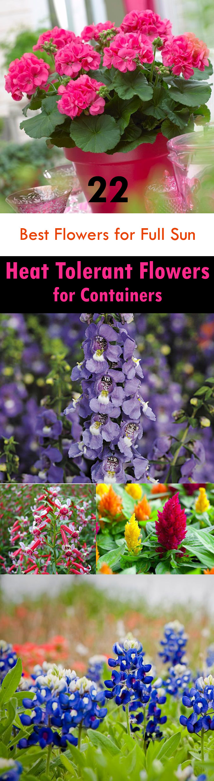 If youre searching for the best flowers for full sun then see our list of heat tolerant flowers.