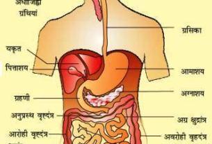 pachan - शरीर के तंत्र | Body system