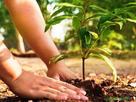 वृक्षारोपण पर निबंध
