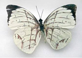 fluturi-1