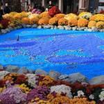 Artă florală la Festivalul crizantemelor