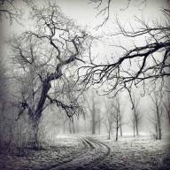 iarna (6)