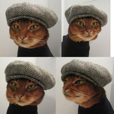 sapca pentru pisica
