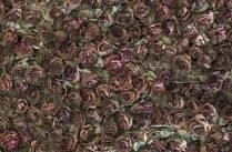 trandafiri-7