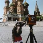 Sotheby's: creațiile cimpanzeului-fotograf estimate la 80.000 de euro