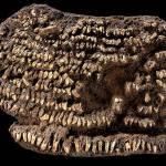 10 dintre cele mai vechi obiecte din lume